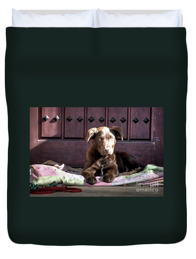 Amador Duvet Cover featuring the photograph Pup by Diego Re