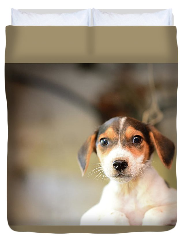 Pets Duvet Cover featuring the photograph Puppy Eyes by Electravk