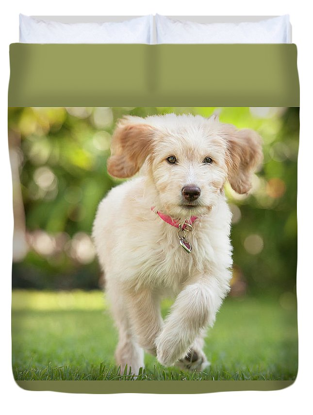 Pets Duvet Cover featuring the photograph Puppy Running Through The Grass by Chris Stein