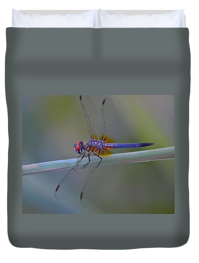 Purple Duvet Cover featuring the photograph Purple And Yellow Dragonfly On Navarre Beach by Jeff at JSJ Photography