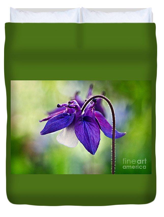 Aquilegia Duvet Cover featuring the photograph Purple Aquilegia by Susie Peek