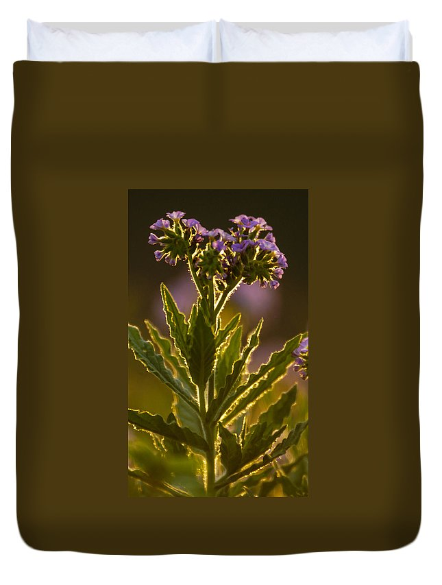Africa Duvet Cover featuring the photograph Purple Backlit by Alistair Lyne