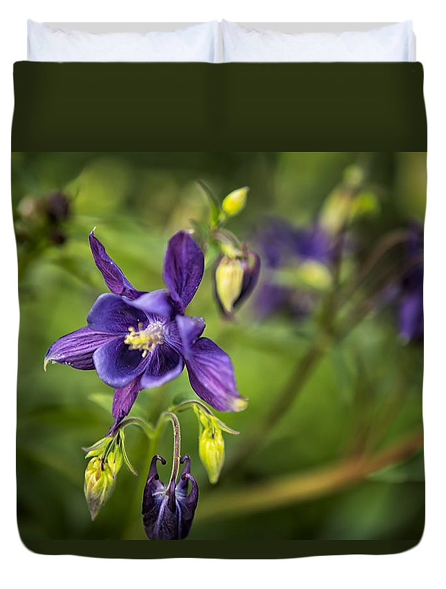 Columbine Duvet Cover featuring the photograph Purple Columbine by Belinda Greb