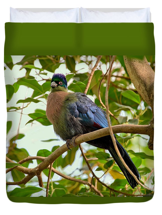 Purple-crested Lourie Duvet Cover featuring the photograph Purple-crested Touraco by Anthony Mercieca