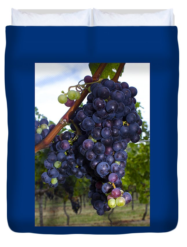 Fruit Duvet Cover featuring the photograph Purple Grapes by Venetia Featherstone-Witty
