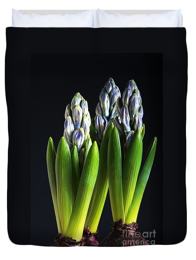 Arrangement Duvet Cover featuring the photograph Purple Hyacinth Ready For Spring. by Jan Brons