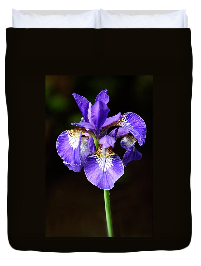3scape Photos Duvet Cover featuring the photograph Purple Iris by Adam Romanowicz