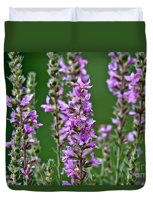 Purple Loosestrife Duvet Cover featuring the photograph Purple Loosestrife by Cheryl Baxter