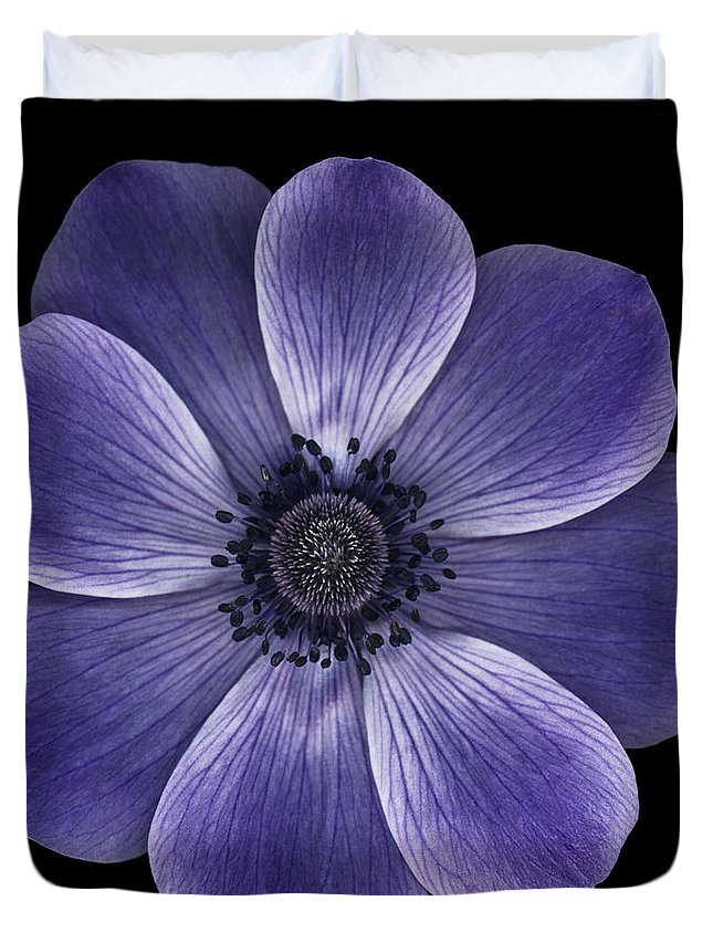 Anemome Poppy Duvet Cover featuring the photograph Purple Poppy by Oscar Gutierrez