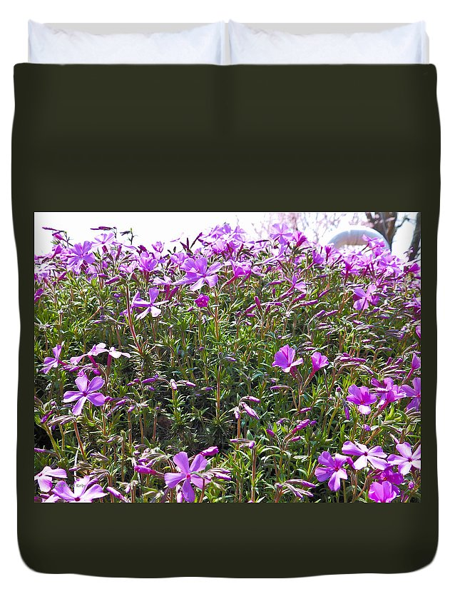 Phlox Duvet Cover featuring the photograph Puryple by Nick Kirby