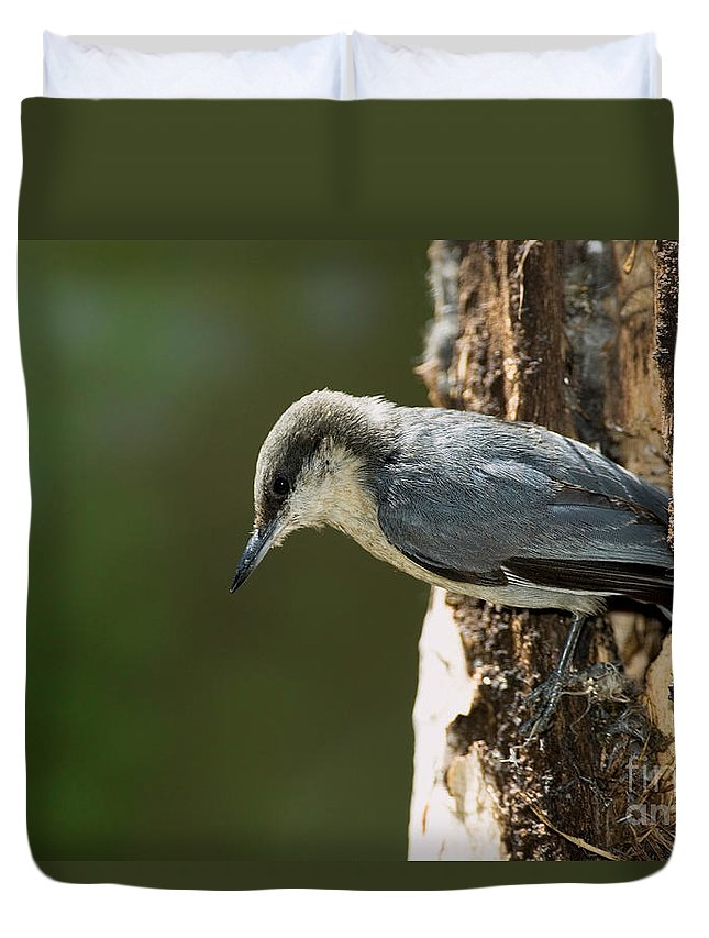 Fauna Duvet Cover featuring the photograph Pygmy Nuthatch by Anthony Mercieca