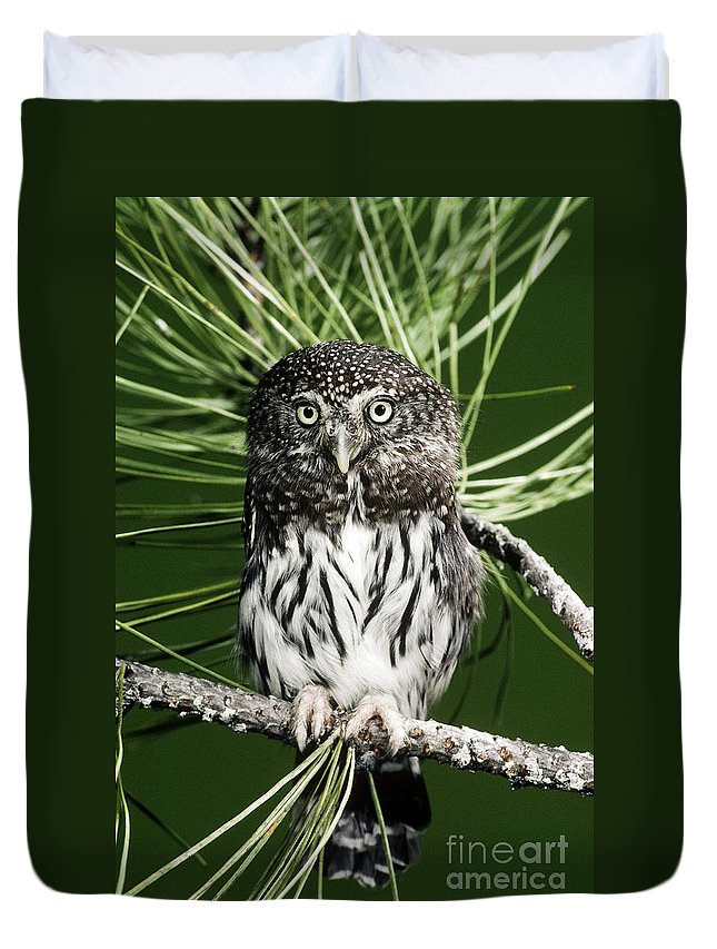 Pygmy Duvet Cover featuring the photograph Pygmy Owl by Anthony Mercieca