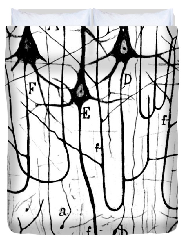 Ramon Y Cajal Duvet Cover featuring the photograph Pyramidal Cells Illustrated By Cajal by Science Source