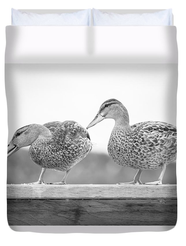 Animal Duvet Cover featuring the photograph Quack Quack by Windy Corduroy