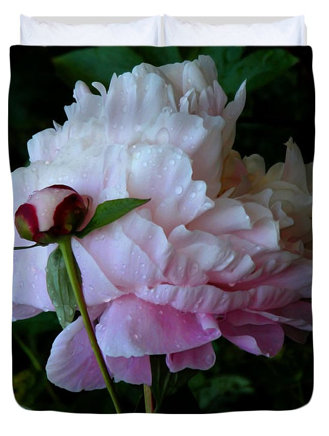 Peony Duvet Cover featuring the photograph Rain-soaked Peonies by Rona Black