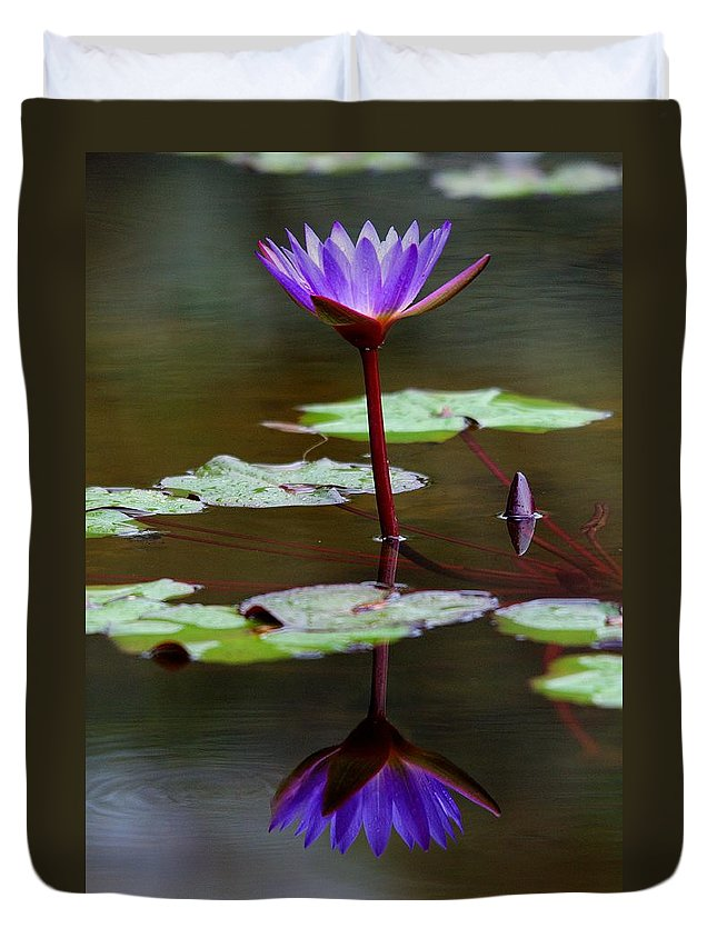 Roy Williams Duvet Cover featuring the photograph Rainy Day Lotus Flower Reflections IIi by Roy Williams