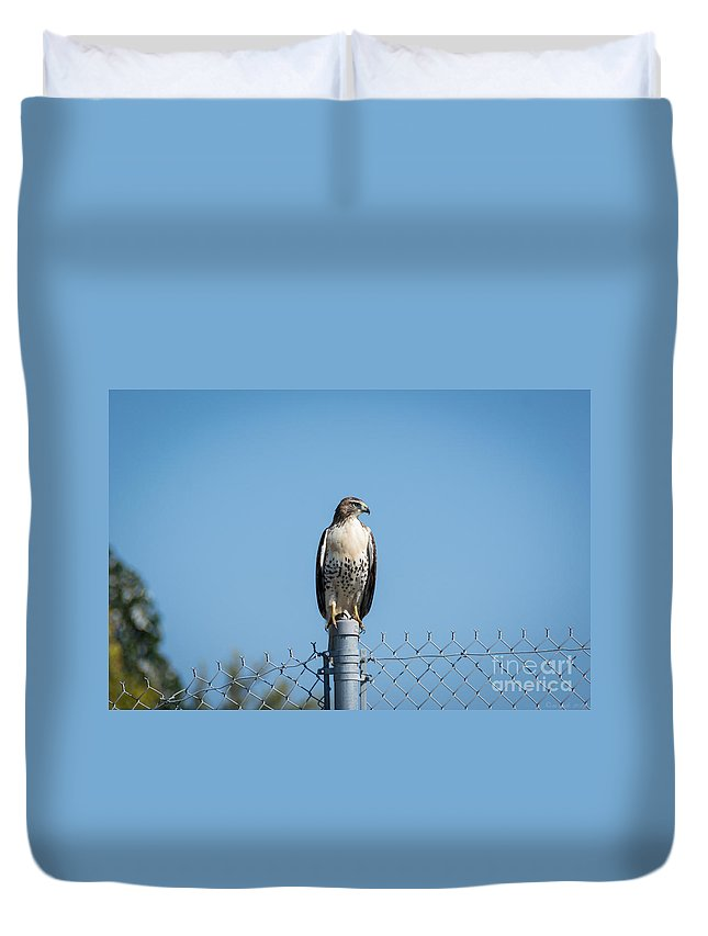 South Dakota Duvet Cover featuring the photograph Raptor - 3 by M Dale