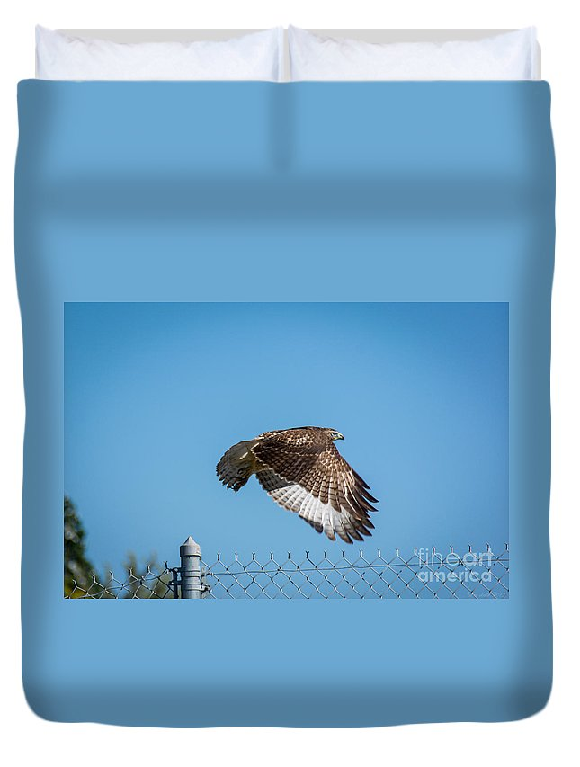 South Dakota Duvet Cover featuring the photograph Raptor - 4 by M Dale