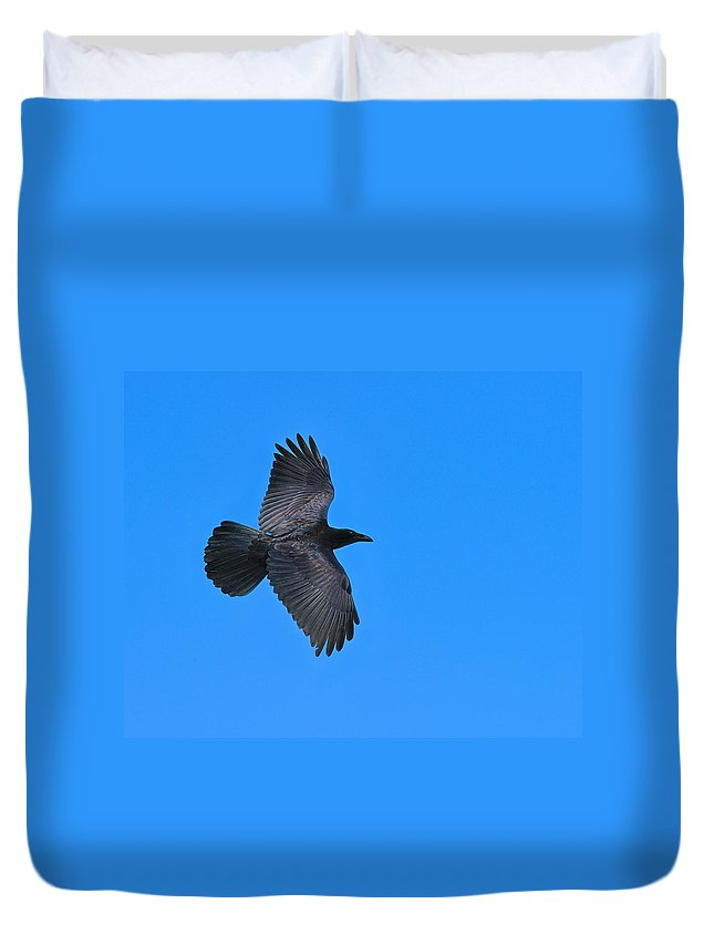 Common Raven (corvus Corax) Duvet Cover featuring the photograph Raven by Tony Beck