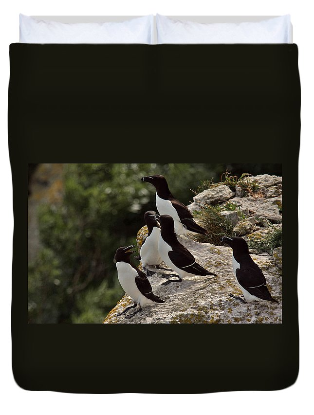 Alvinge Duvet Cover featuring the photograph Razorbill Cliff by Dreamland Media