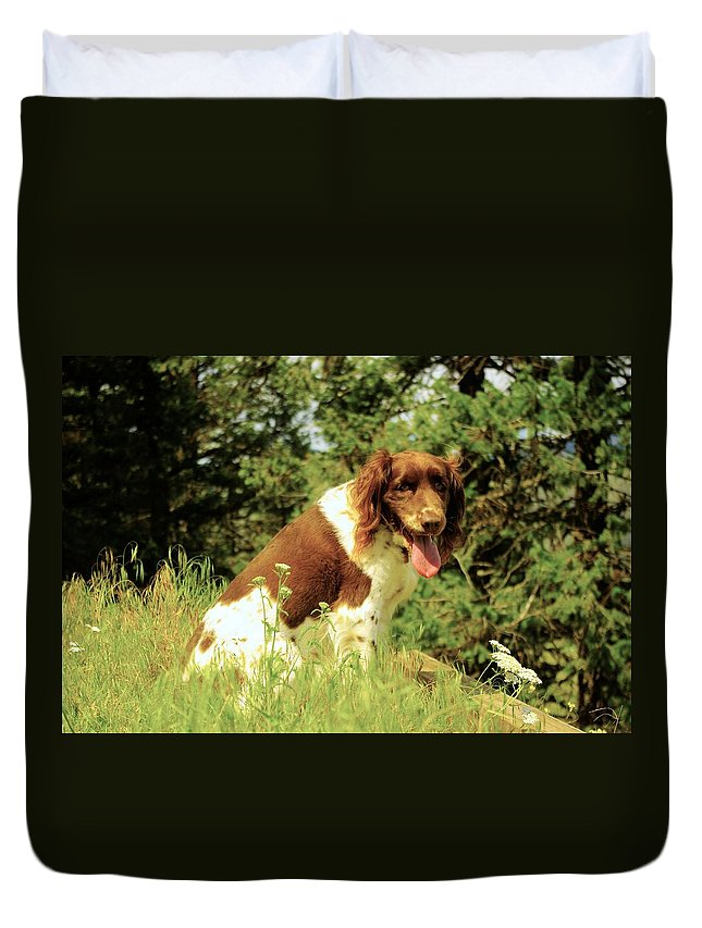 Springer Duvet Cover featuring the photograph Razzle At The Top Of The Trail by John Greaves