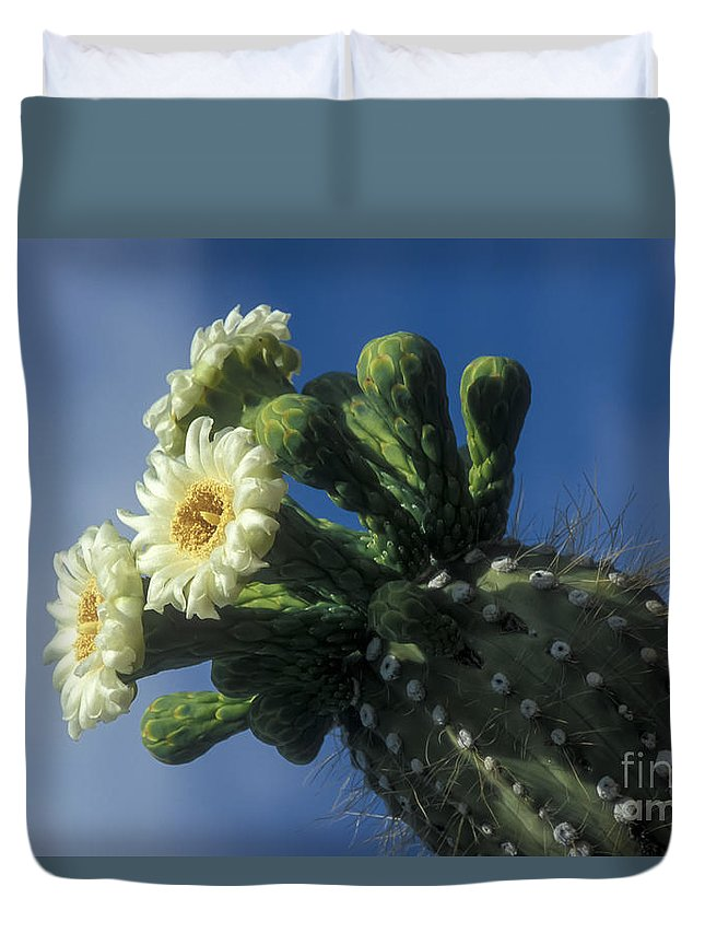 Cactus Duvet Cover featuring the photograph Reaching For The Sky by Sandra Bronstein