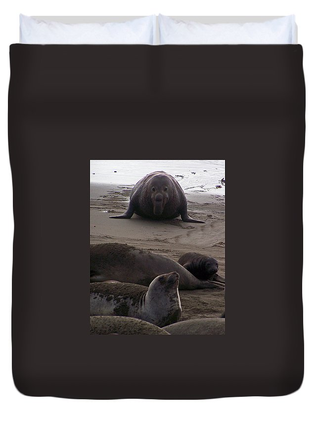 Ready Or Not Duvet Cover featuring the photograph Ready Or Not by Jennifer Robin
