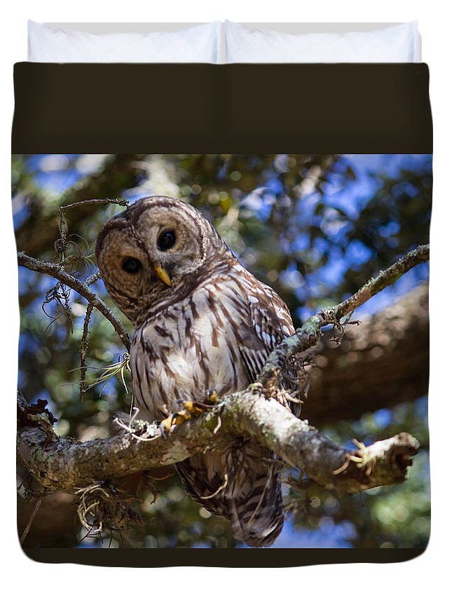 Barred Owl Duvet Cover featuring the photograph Are You Talking To Me? by Patti Colston