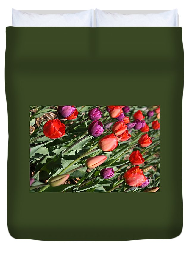Tulips Duvet Cover featuring the photograph Red And Purple Tulips by Dora Sofia Caputo Photographic Design and Fine Art