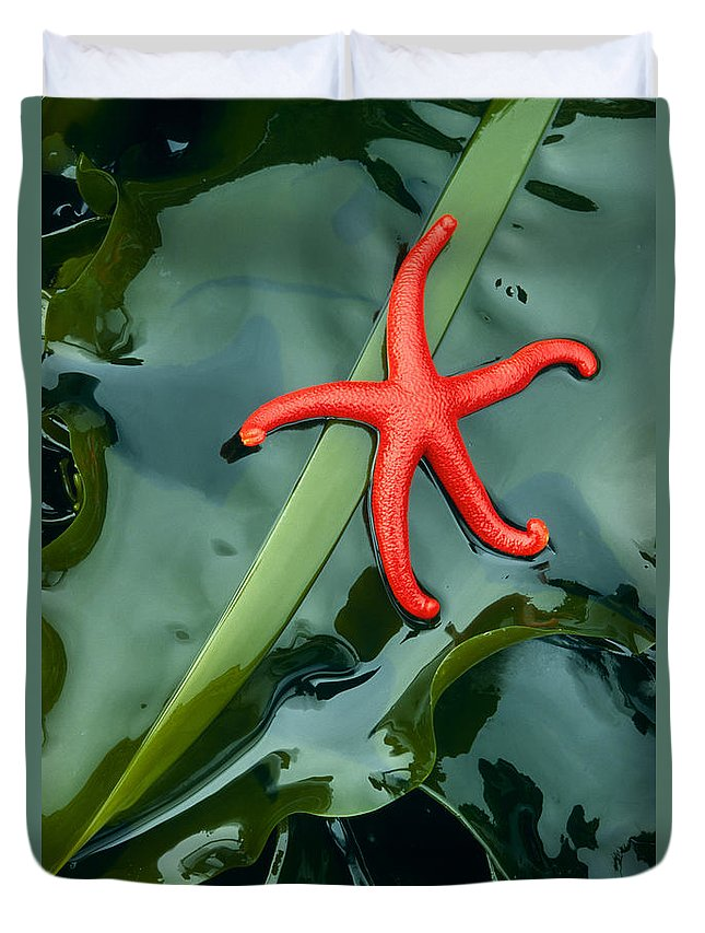 America Duvet Cover featuring the photograph Red Bloodstar by Inge Johnsson