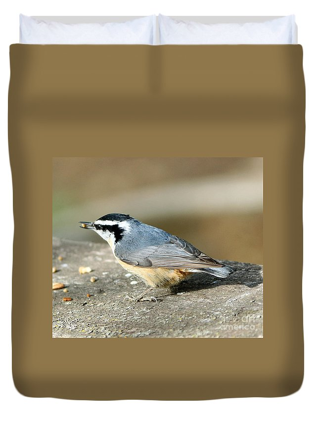 Red-breasted Nuthatch Duvet Cover featuring the photograph Red-breasted Nuthatch by Lori Tordsen