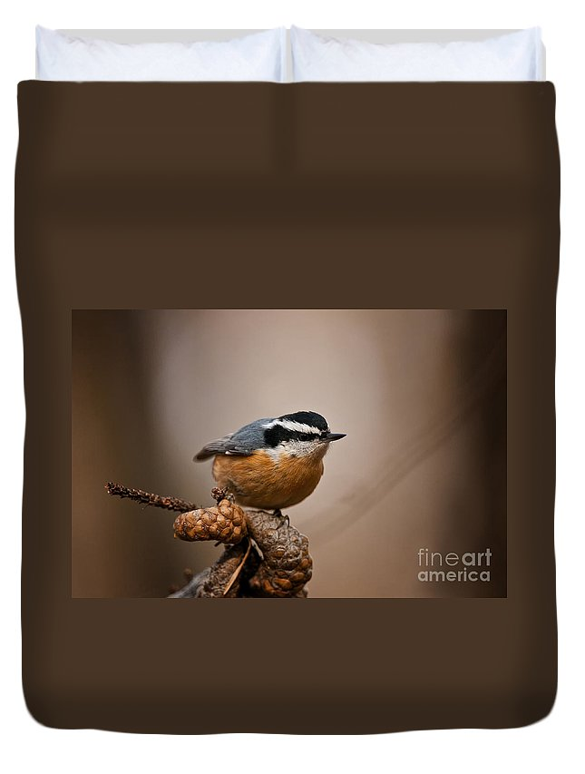 Red-breasted Nuthatch Duvet Cover featuring the photograph Red-breasted Nuthatch Pictures 36 by World Wildlife Photography