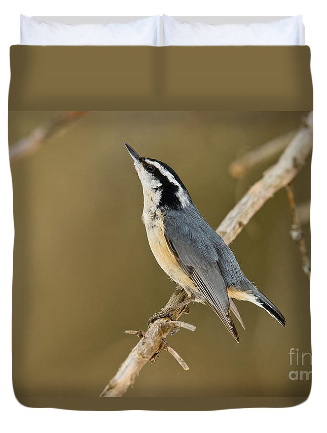 Red-breasted Nuthatch Duvet Cover featuring the photograph Red-breasted Nuthatch Pictures 76 by World Wildlife Photography
