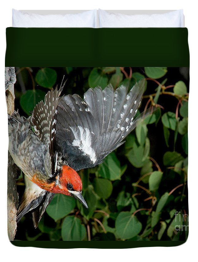Fauna Duvet Cover featuring the photograph Red-breasted Sapsucker by Anthony Mercieca