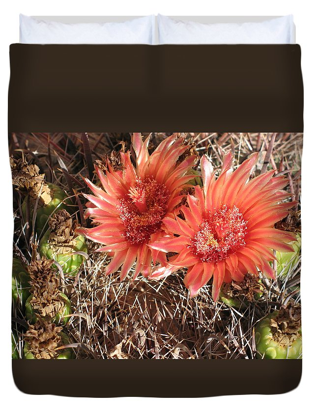 Cactus Duvet Cover featuring the photograph Red Cactus by Christiane Schulze Art And Photography
