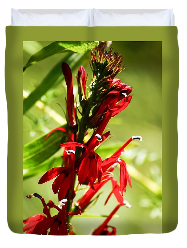 Red Cardinal Flower Duvet Cover featuring the photograph Red Cardinal Flower by Cynthia Woods