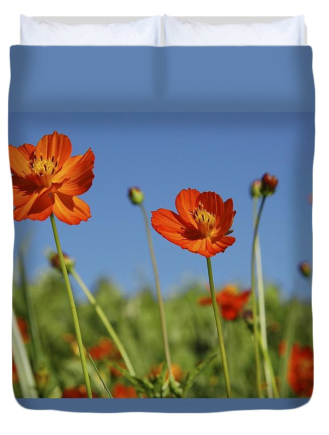 Cosmos Duvet Cover featuring the photograph Red Cosmos Flower by Tracey Harrington-Simpson