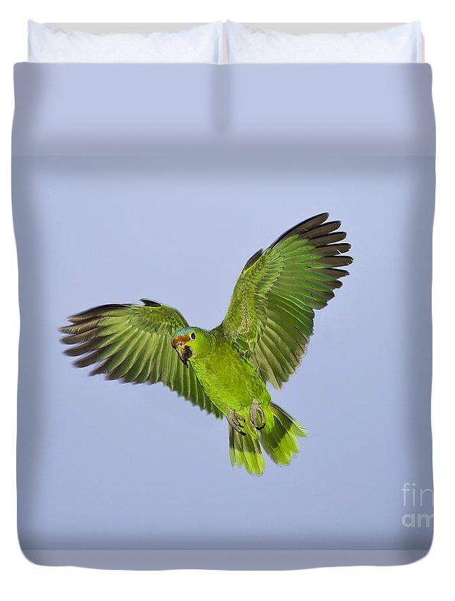 Red-crowned Parrot Duvet Cover featuring the photograph Red-crowned Parrot by Anthony Mercieca