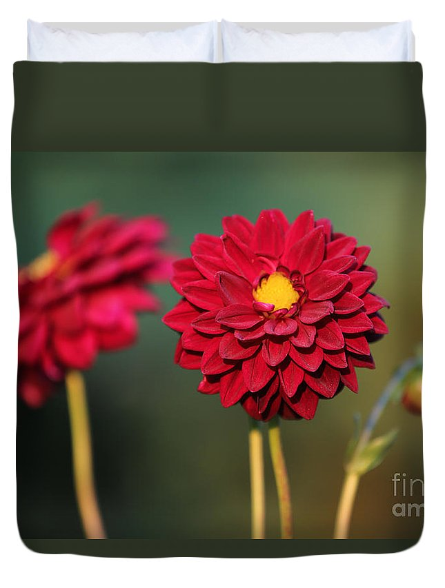 Red Duvet Cover featuring the photograph Red Dahlias by Carol Groenen