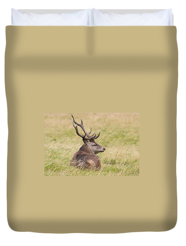 Red Deer Duvet Cover featuring the photograph Red Deer Cervus Elaphus by Chris Smith