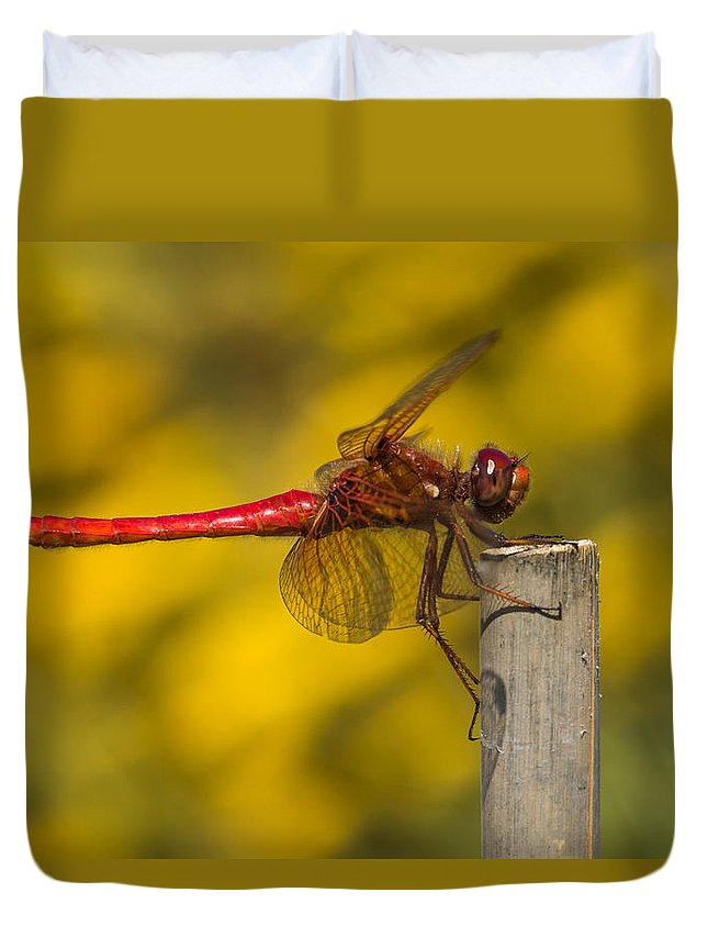(sympetrum Fonscolombii) Duvet Cover featuring the photograph Red Dragonfly Waiting by Karen Forsyth