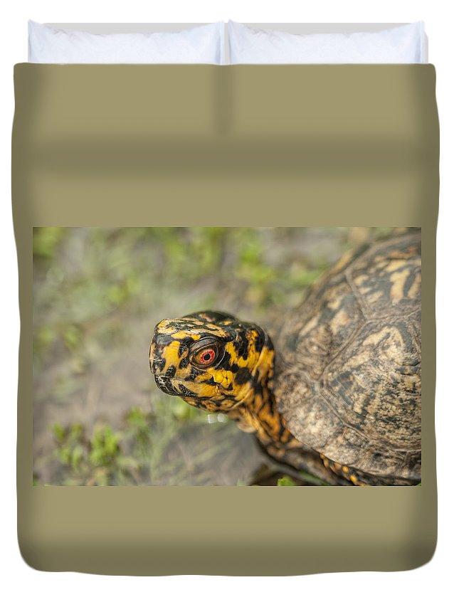 Alabama Duvet Cover featuring the photograph Red Eyed Alabama Box Turtle - Terrapene Carolina by Kathy Clark