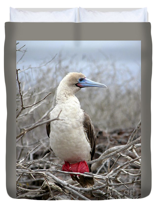Red-footed Booby Duvet Cover featuring the photograph Red-footed Booby by Liz Leyden