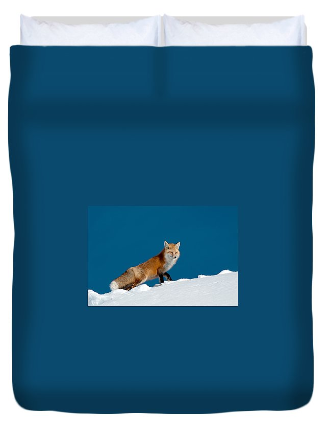 Red Fox Duvet Cover featuring the photograph Red Fox by Gary Beeler