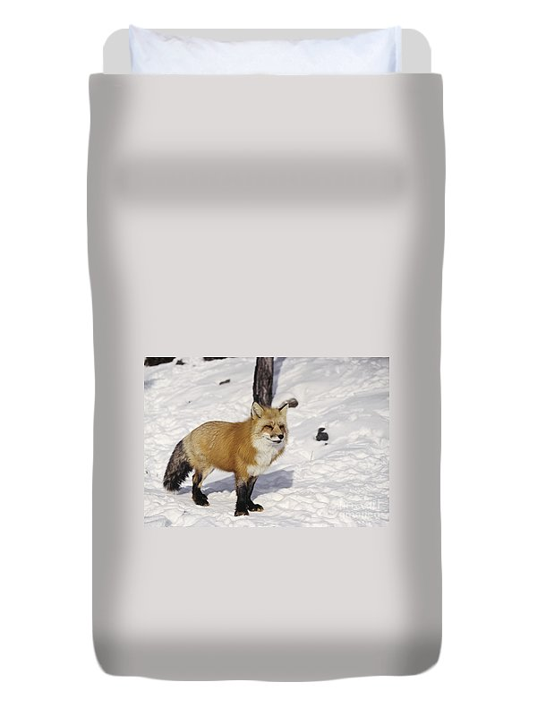 Fox Duvet Cover featuring the photograph Red Fox In The Snow by Les Palenik