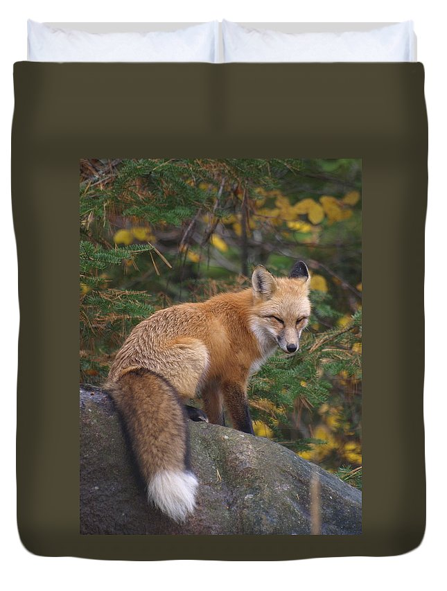 Foxes Duvet Cover featuring the photograph Red Fox by James Peterson