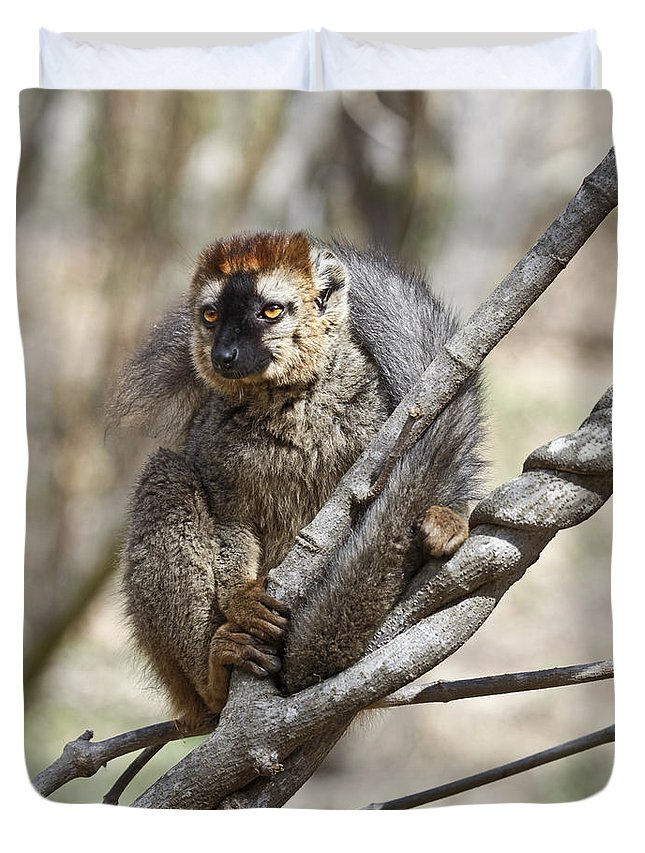 Red-fronted Lemur Duvet Cover featuring the photograph Red-fronted Lemur Eulemur Rufifrons by Liz Leyden