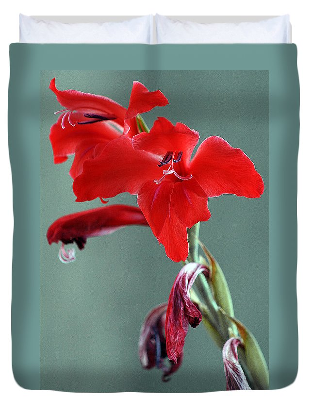 Red Duvet Cover featuring the photograph Red Gladiolus by Ben and Raisa Gertsberg