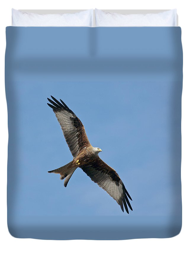 Red Kite Duvet Cover featuring the photograph Red Kite In Flight by Gary Eason