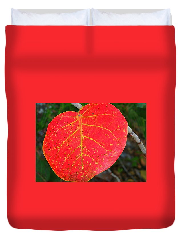 Leaf Duvet Cover featuring the photograph Red Leaf With Yellow Veins by Laurel Talabere